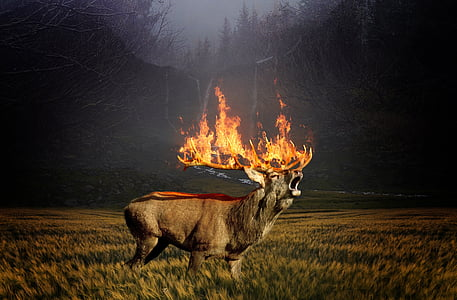 deer with burning antlers
