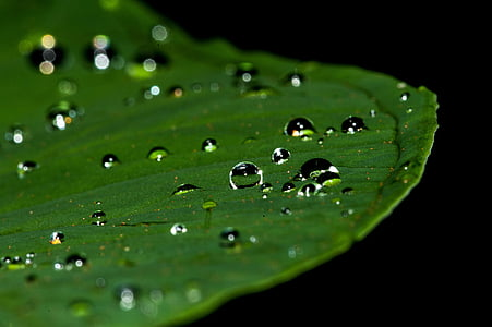 macro photography of water drops on green leaf plant
