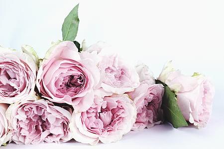 pink rose bundle