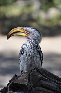 white and black bird macro photography
