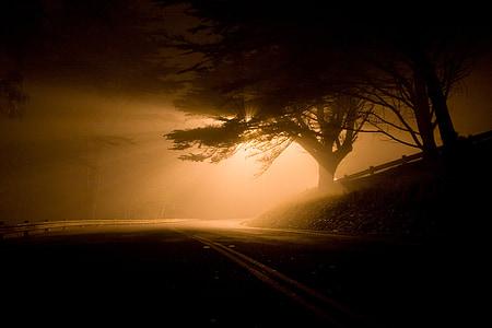 empty road with street light near tree