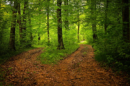 road path and green leaf tree