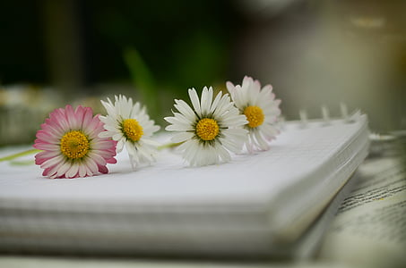 white and pink daisies on white notebook in shallow focus photography