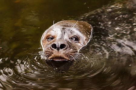 sealion on body of water