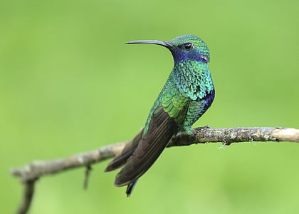 macro photography of hummingbird on twig