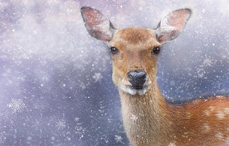 photo of brown deer
