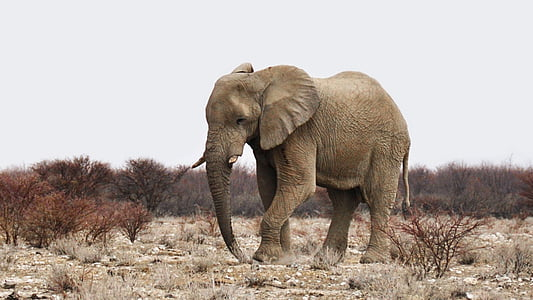 elephant on dessert