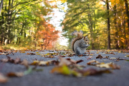 close up photograph of squirrel on asphalt road