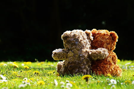two brown and grey bear plush toys on green grass