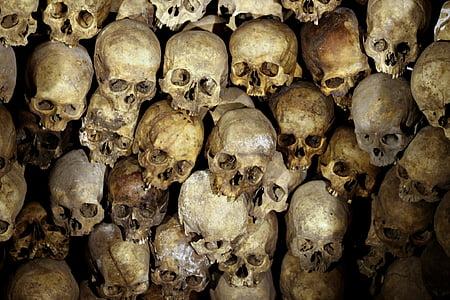 brown skull lot