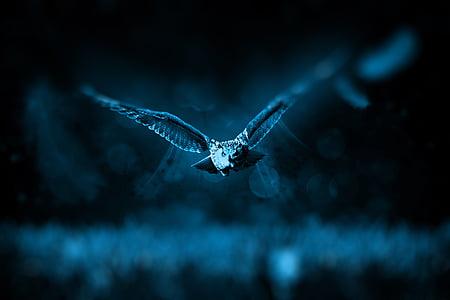 tilt shift photo of flying owl during nighttime
