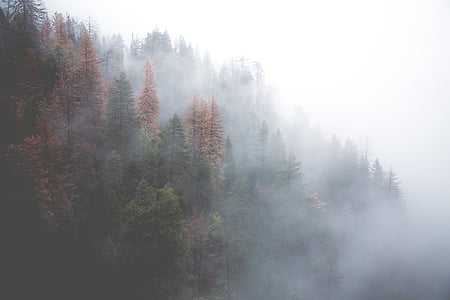 landscape photography of green pine trees with fog