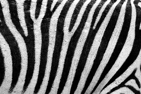 white and black zebra pattern textile