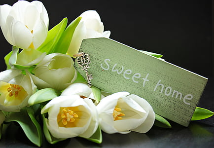white tulips with sweet home text overlay