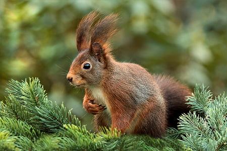 brown hare on green pine tree macro shot