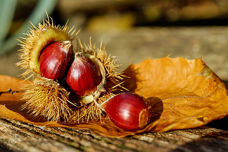 red and brown spiky fruit brown surface at daylight photography
