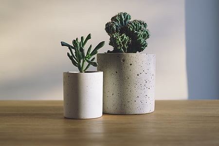 two green plants with pot
