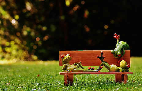 three frogs on bench chair