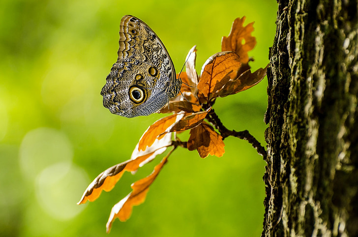 brown butterfly on tree branch in shallow focus photography